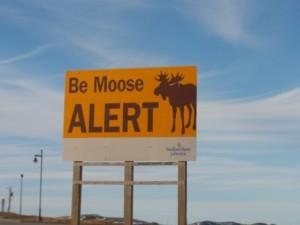 Be Moose Alert